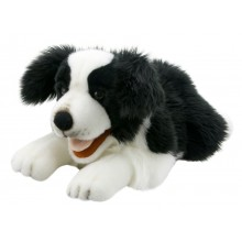 Playful Puppies - Border Collie