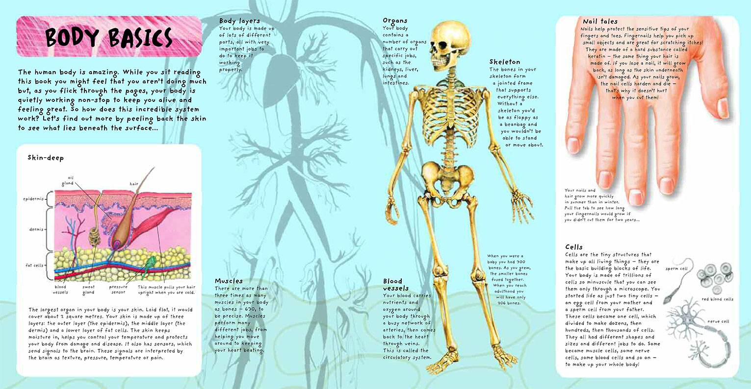 Pop Up Facts Human Body Science Discovery Books